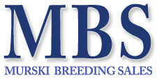 Murski Breeding Sales